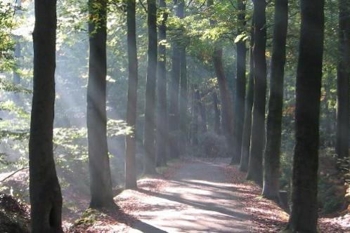 Bed&Breakfast 't Kerselarenhof Meetjesland Natuur